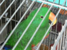 鈴木小鳥店