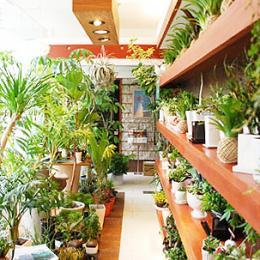 Jungle Studio Rocca