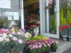 花のお店おおはし フラワーボイス