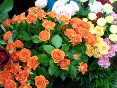 花工房 カトレア