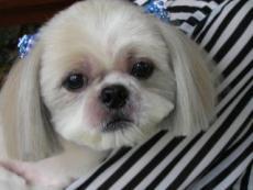 犬の美容室 ユミトリミングサロン