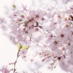 愛知県緑化センター 昭和の森|豊田市