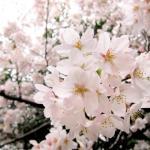 亀城公園|刈谷市