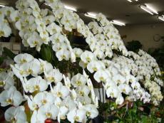 (有)花の清香園 豊明店